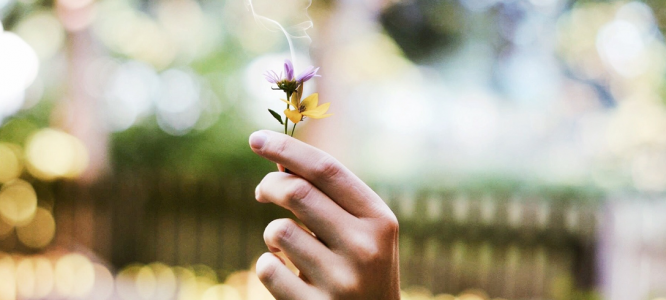 Terpeni nella cannabis e le loro proprietà terapeutiche