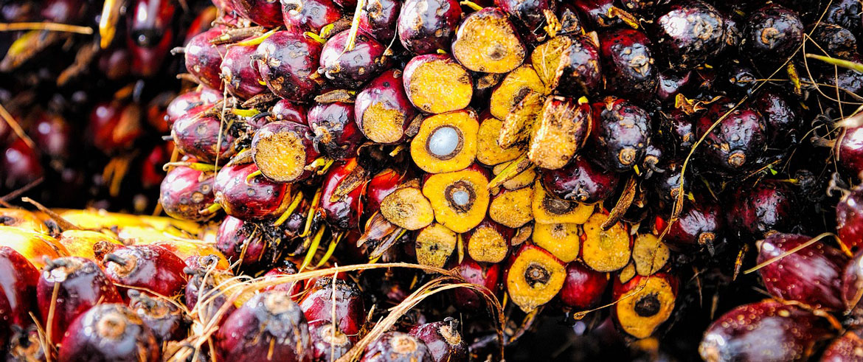 Perché i prodotti Hemptouch non contengono l'olio di palma