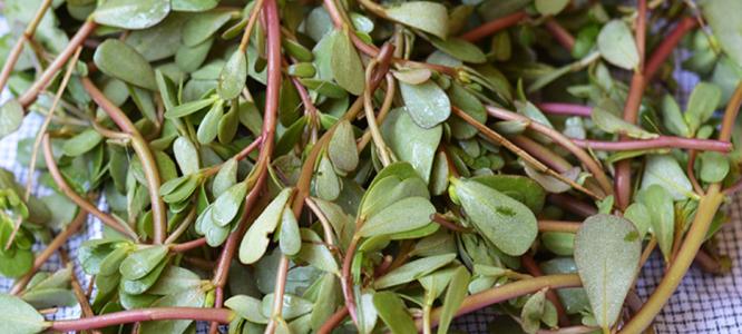 Omega 3 maščobne kisline v rastlinah iz naše okolice