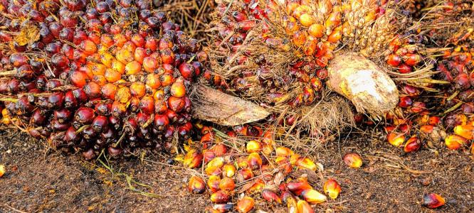 Zakaj naši izdelki ne vsebujejo palmovega olja?