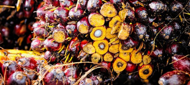 Why do Hemptouch products not contain any palm oil?