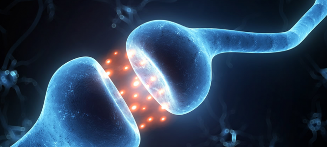 6 interesting facts about the endocannabinoid system in our bodies